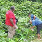 Carolina Kudzu Crazy turns invasive plant into tasty treats, more